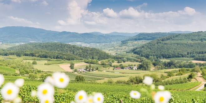 Im Herzen des Markgräflerlandes: Bad Bellingen