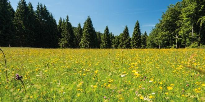 Eindrucksvolle Erlebnisse in atemberaubender Kulisse im Thüringer Wald