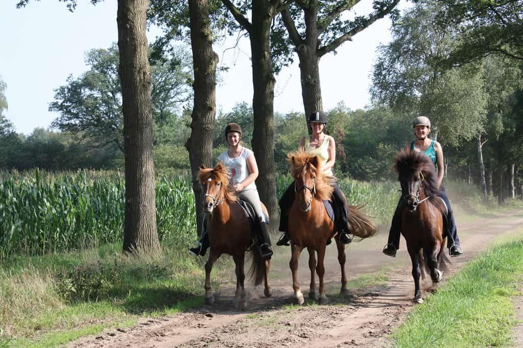 Kurzurlaub im Münsterland