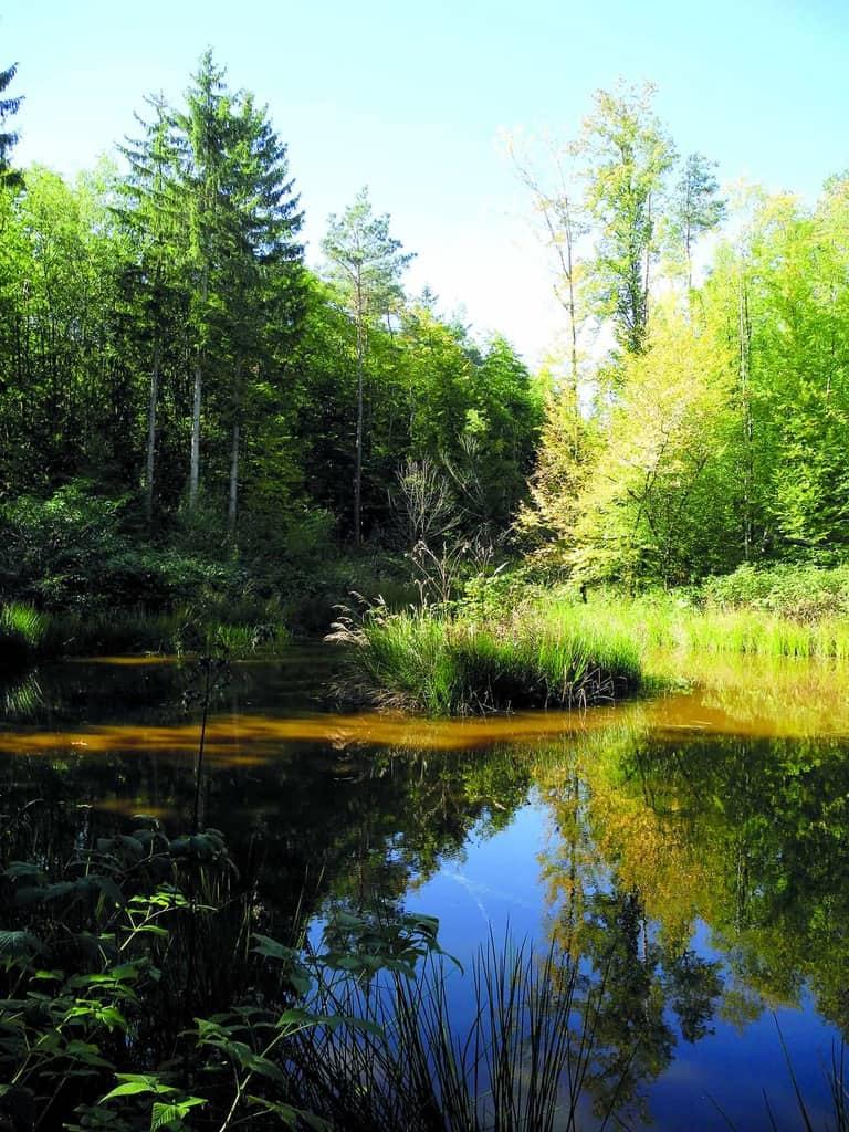 Naturpark Steigerwald / Oberschwarzach Foto: Dorothea Jeske