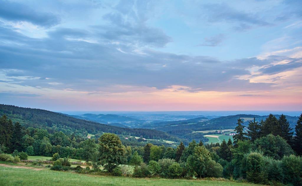 Waldgeflüster im Bayerischen Wald