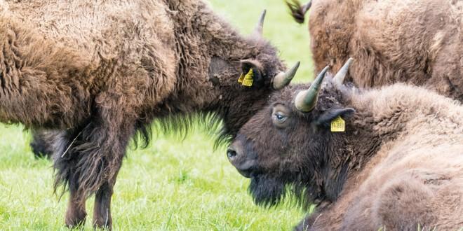 Aller-Leine-Tal: Malerische Heidedörfer, ein Urstromtal und jede Menge wilde Tiere