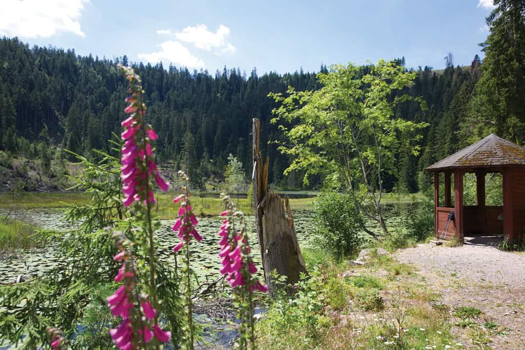 Baiersbronn im Schwarzwald | Wanderhimmel, Gourmet-Mekka und Wohlfühl-Oase