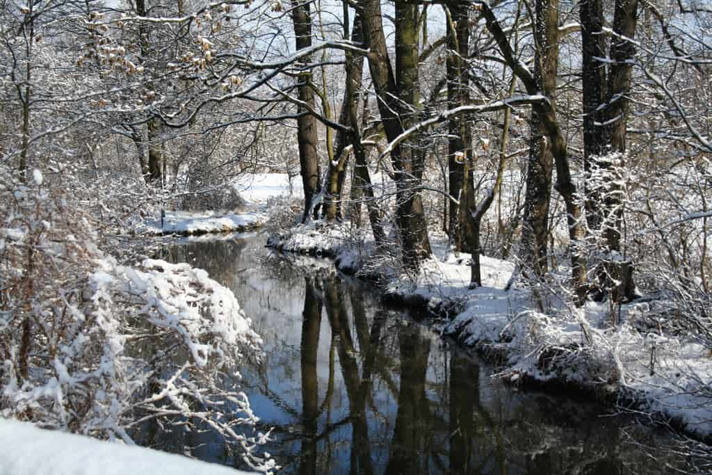 Den Spreewald im Winter erleben? Unbedingt!