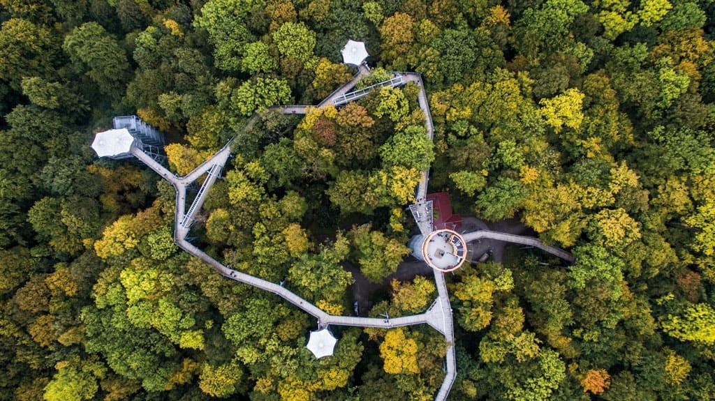 Auf Wildnistour in Thüringen – Unterwegs im UNESCO Weltnaturerbe Nationalpark Hainich