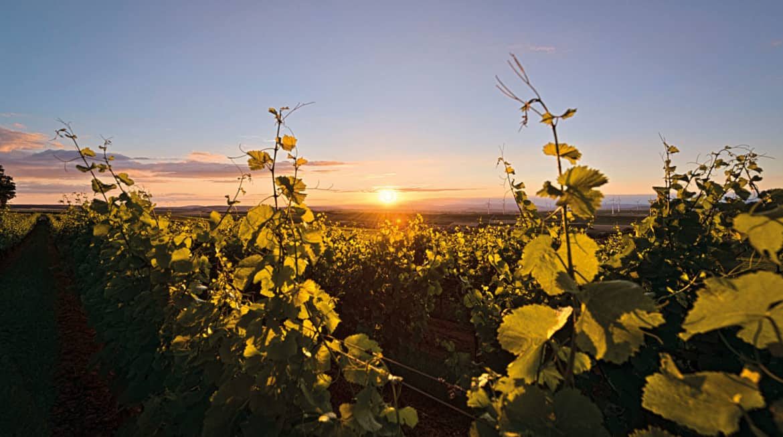 Rheinhessen – Das Weinerlebnisland