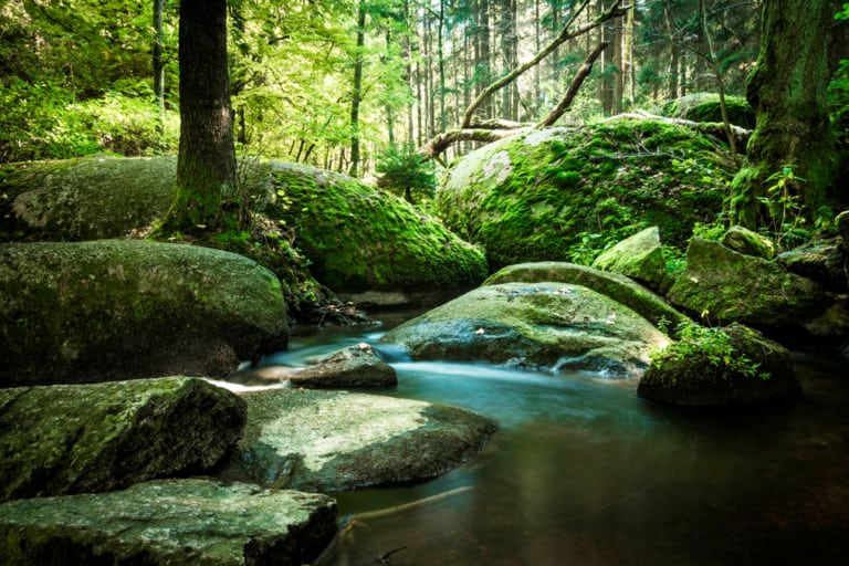 Naturparkland Oberpfälzer Wald