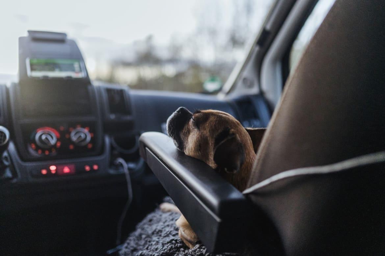 Reisen mit Hund – ein Spaziergang durch Deutschland