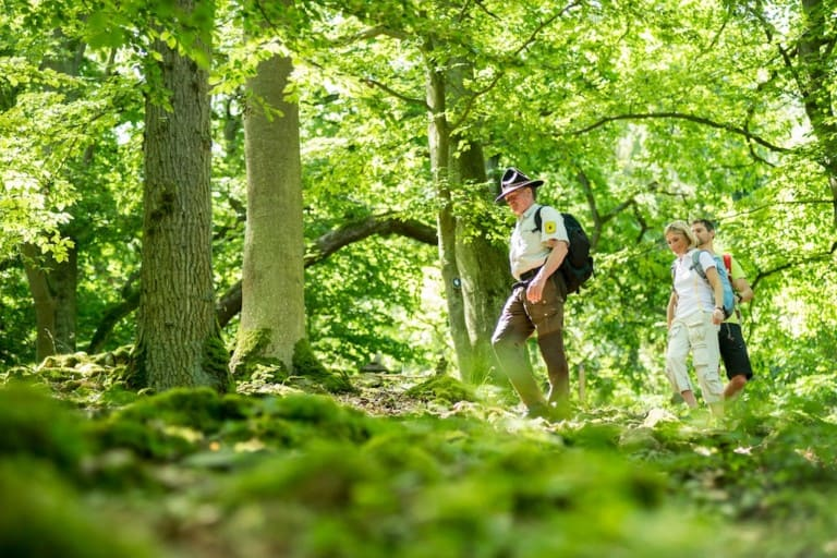 Der Nationalpark Kellerwald-Edersee lässt sich gut zu Fuß erkunden, sowohl auf eigene Faust als auch mit einem Ranger bei einer geführten Wanderung. (Foto: epr/Waldecker Land/Nationalpark Kellerwald-Edersee)