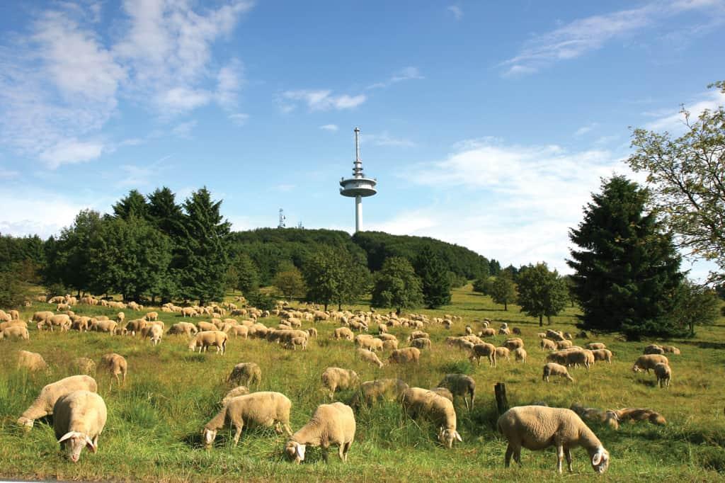EIN SANFTER RIESE: Der Vogelsberg – Topografisch einzigartig
